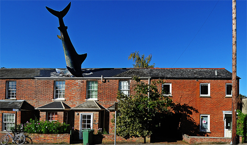Headington Shark